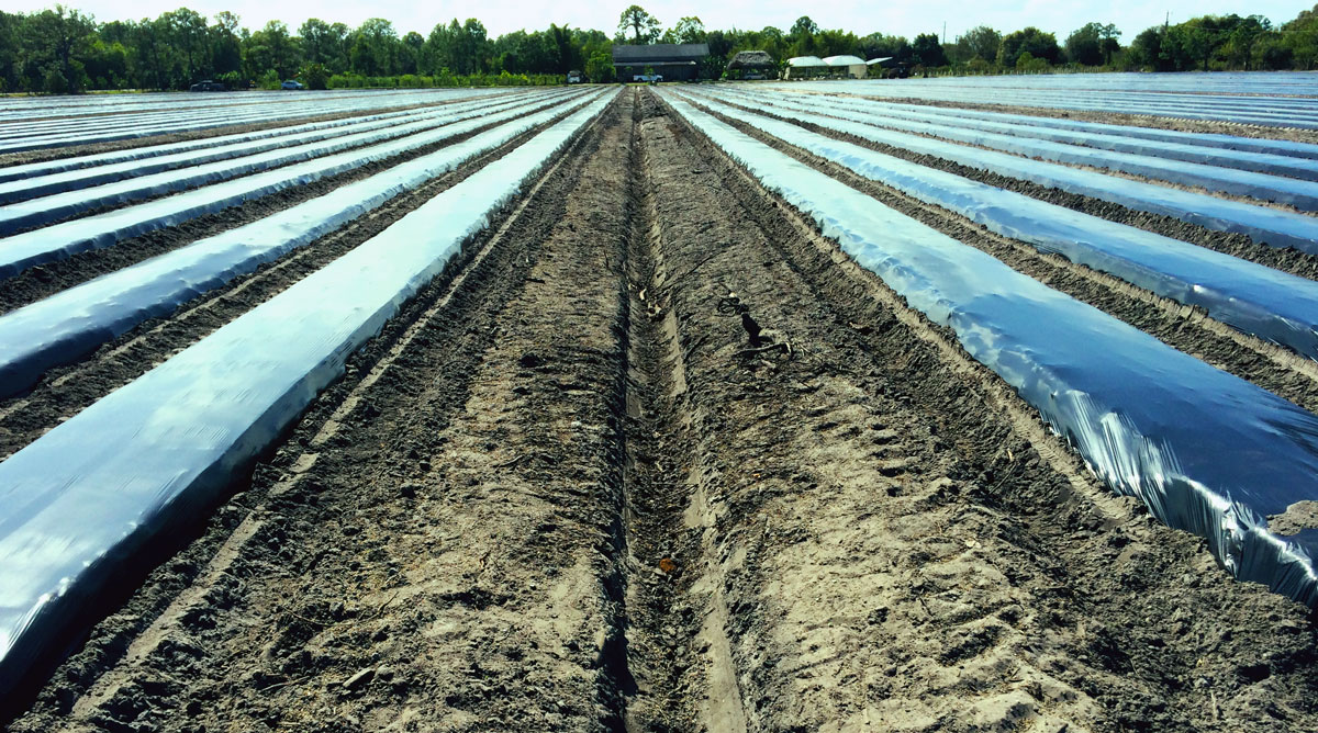 organic-farm-field-one-point-perspective-naples-food-thought