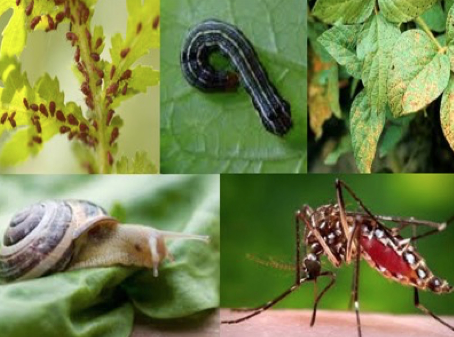 Garden Pests, Problems, & Solutions