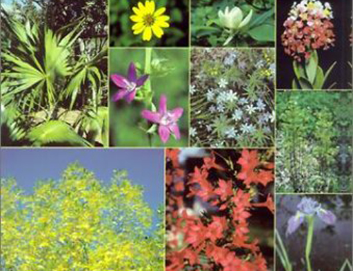 Using Native Plants in our Gardens