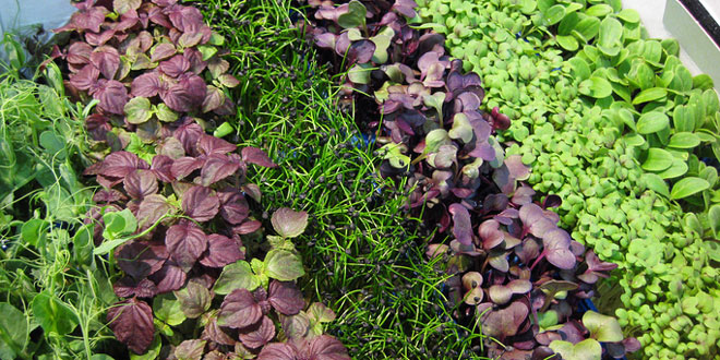 Grow your own Microgreens Workshop